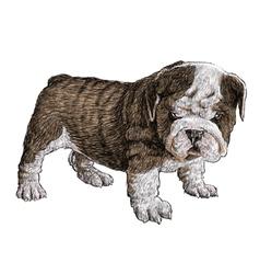 Puppy bulldogs 05 vector