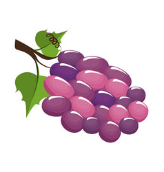 wine grapes fruit icon vector image