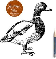 Hand drawn duck animal sketch isolated vector