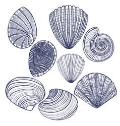 Hand drawn shell set vector