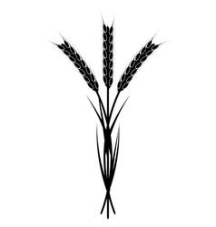 Wheaten Ear vector image