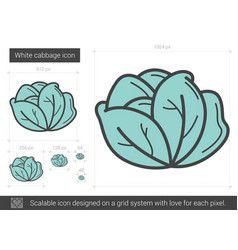 White cabbage line icon vector
