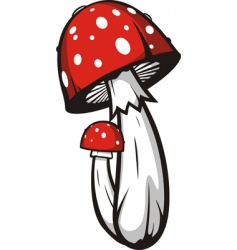 Agaric mushrooms vector