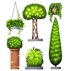 Different decorative plants vector
