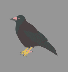 in flat style of raven vector image vector image