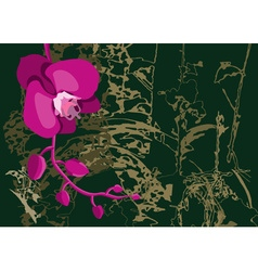 Orchid flower on a dark background vector