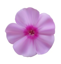 Phlox flowers vector image
