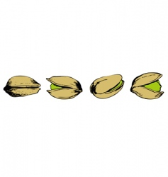Set of pistachio vector