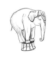 doodle circus elephant vector image