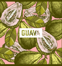 guava fruit background vector image vector image