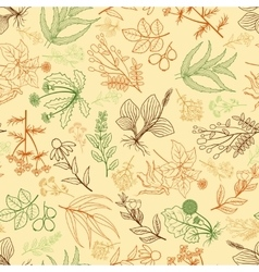 Herbs background in hand drawn style vector