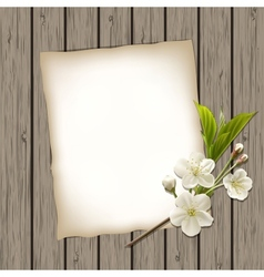 Blank paper with blossoming cherry branch vector