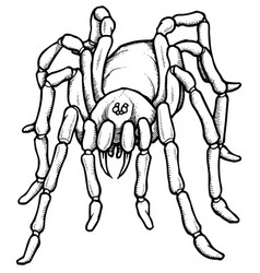 Cartoon stylized blue tarantula spider vector