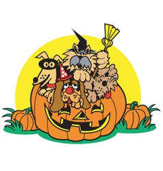 Dogs in a pumpkin vector image vector image