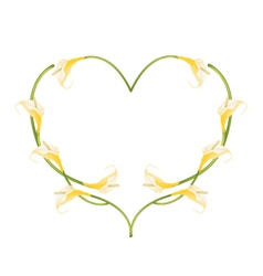 Beautiful yellow anthurium flowers in heart shape vector
