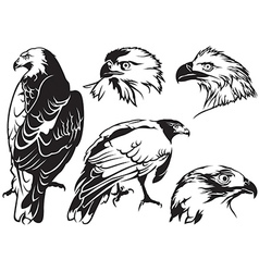 Eagle tattoo drawings vector