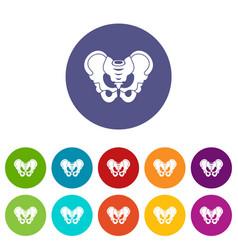 Pelvis set icons vector