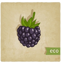blackberry eco background vector image
