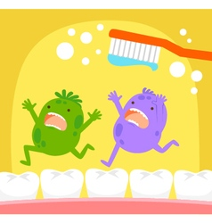 tooth germs and toothbrush vector image