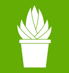 aloe vera plant icon green vector image
