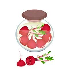 Jar of pickled radishes or beets with malt vinegar vector