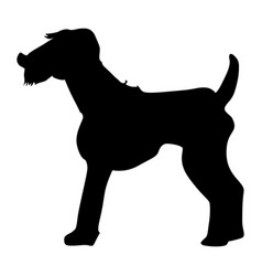 Welsh terrier vector