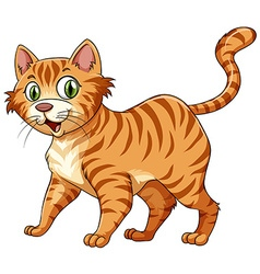Feline cat in ginger vector