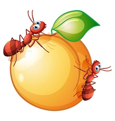 A fruit with two ants vector
