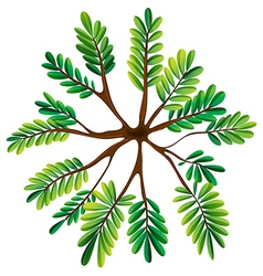 A topview of a fern plant vector