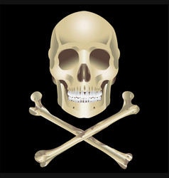 Human skull and crossbones vector