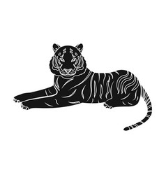 tiger a predatory animal the belgian tiger a vector image