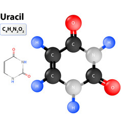 Uracil molecule vector