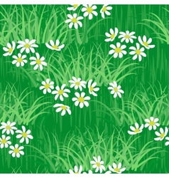 Camomile field seamless background vector