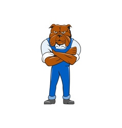 Bulldog Standing Arms Crossed Cartoon vector image