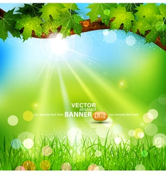 spring background with trees vector image vector image