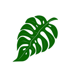Summer palm leaf vector
