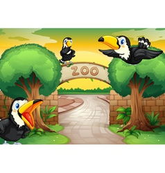 zoo and birds vector image