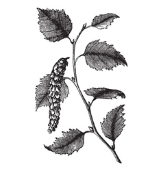 Paper birch leaves engraving vector