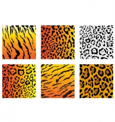 wildcat fur vector image vector image