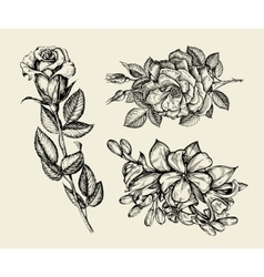Flowers Hand drawn sketch flower rose floral vector image