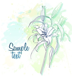 watercolor lily vector image