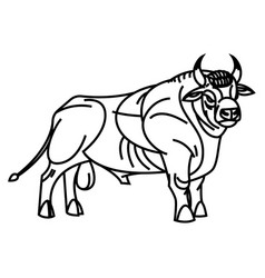 Drawing of standing bull vector