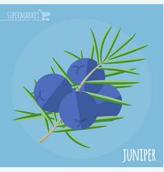 Juniper flat design icon vector