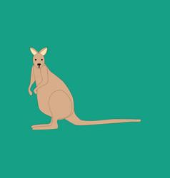 Kangaroo animal vector