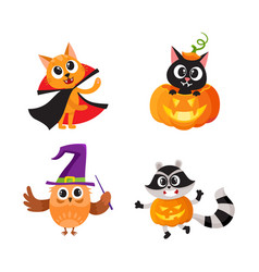 Cat kitten owl and raccoon in halloween costumes vector