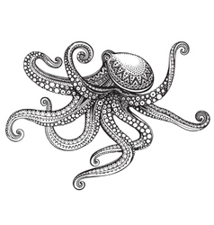 Hand drawn octopus in graphic ornate style vector image