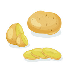 potatoes isolated vector image