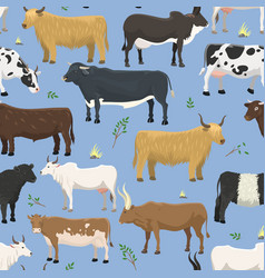 Set of bulls and cows farm animal cattle mammal vector