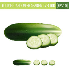 Cucumber on white background vector