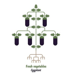 Eggplant vegetables vector image vector image